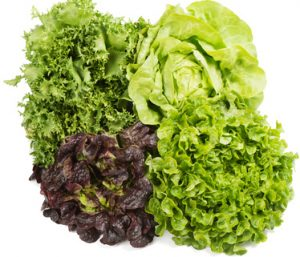 Fresh green and red lettuce isolated on a white background.
